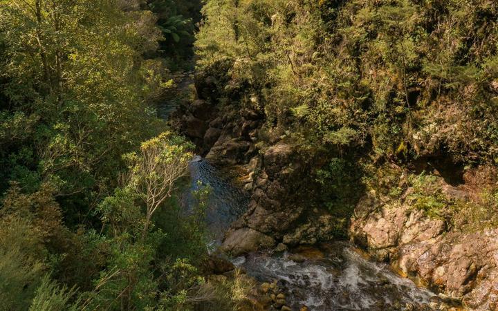 The Wharekirauponga bush in the Coromandel where OceanaGold is planning an underground tunnel to mine gold.