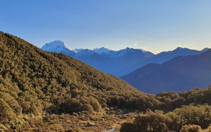 The -run study on rat density was conducted at Lake Alabaster in remote Fiordland.