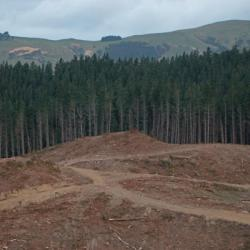 Forestry Amendment Bill would hurt GDP, damage industry - NZIER