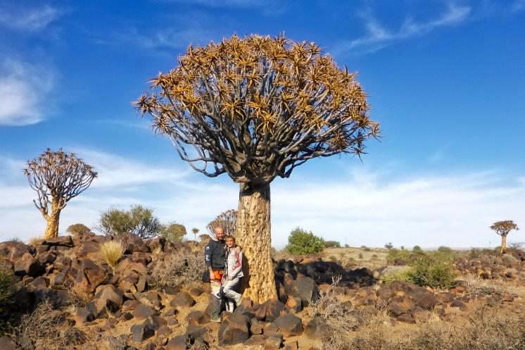 Sudafrica e Namibia in moto, la foresta degli alberi Aloe dichotoma