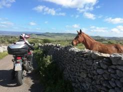 sardegna-gran-tour-terza-tappa-cavallo-campagna