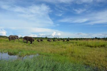 F.Bertolini-Transafrica-parco Chobe-Botswana