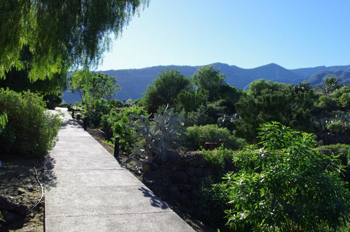 Guimar-Museum-Tenerife-path