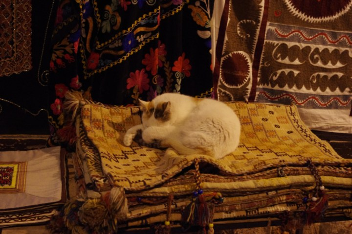 Antalia-Turkey-occupy-Gezy-cat
