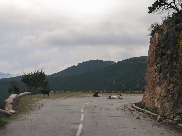 Corsica - road Calvi to Porto-check team