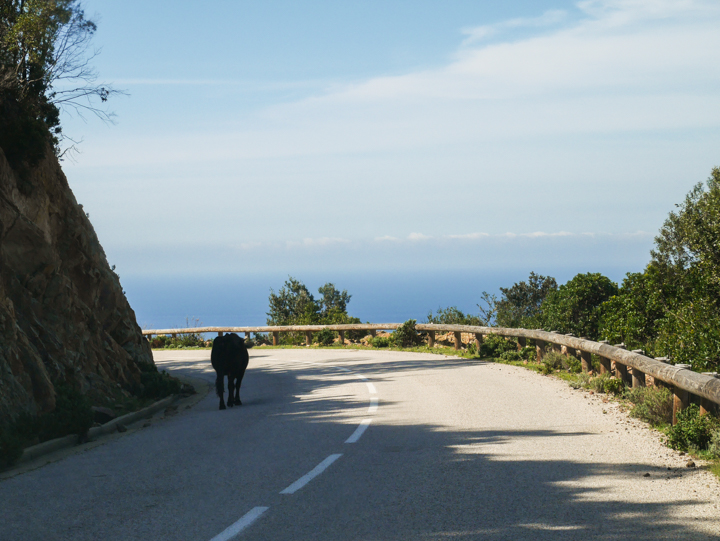 Corsica - road Calvi to Porto-maintenance chef going to work