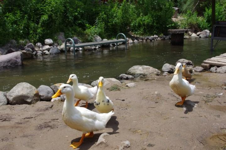 Ihlara Valley - Cappadocia - Turkey - the ducks