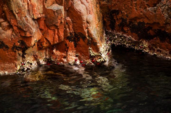 Scandalo reserve - Corsica - Beadlet anemones