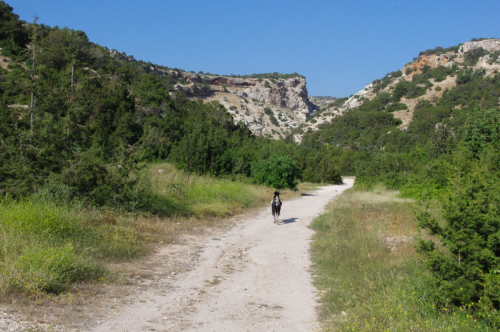 The Avakas Gorge - Cyprus - guide on the path to the gorge