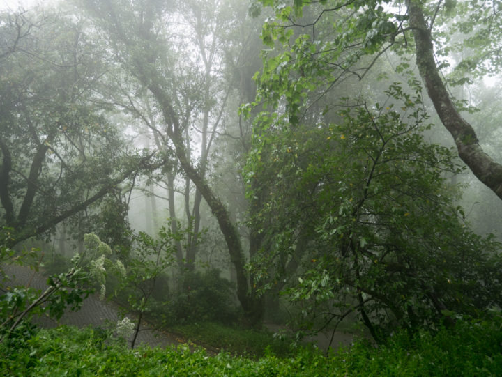Fog in the park of the Pena Palace - Sintra, Portugal - Learn more on roadtripsaroundtheworld.com