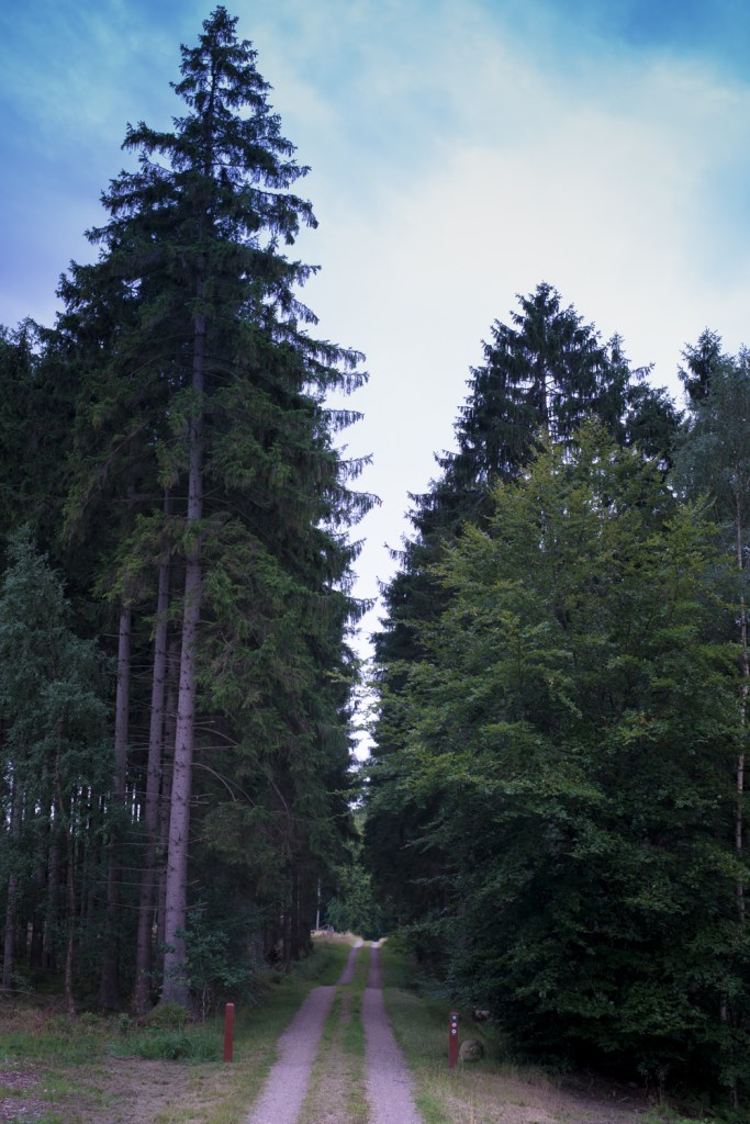 A forest path at the par force hunting landscape in Denmark - UNESCO World Heritage Site - on RTatW