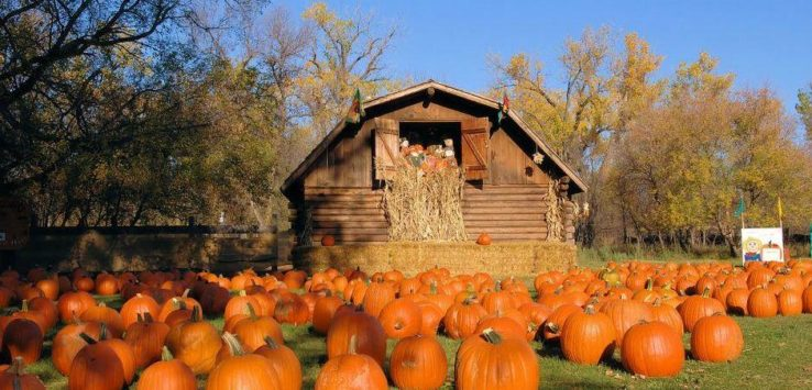 Vermont Wallpaper Fall Pumpkin Patches In North Dakota Road Trips For Families