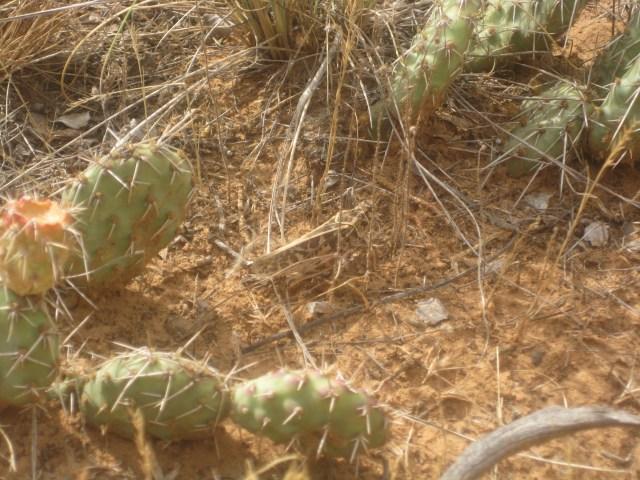 Dinosaur Track Trail in Red Fleet State Park