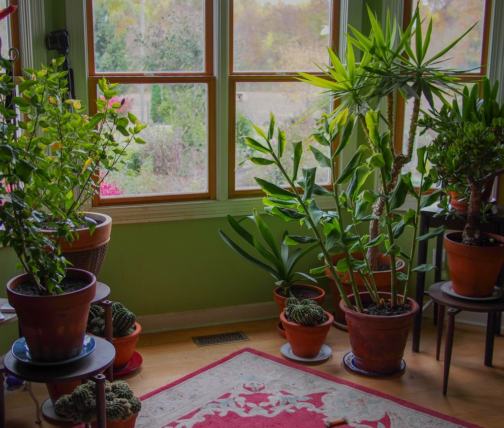 What You Need to Know About Moving Houseplants