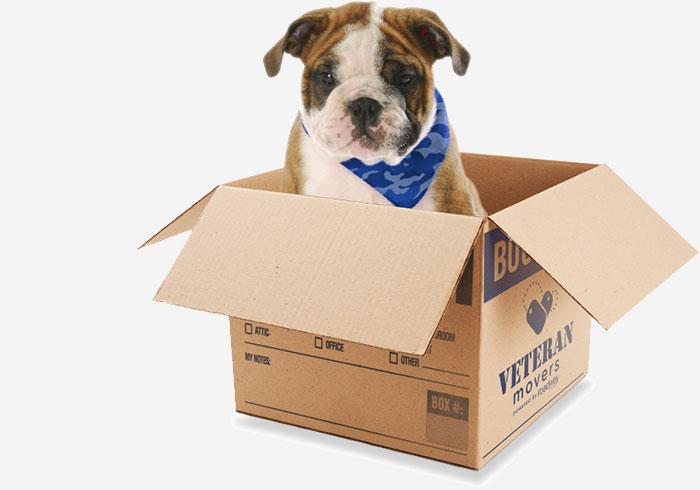 Veteran Movers Dog