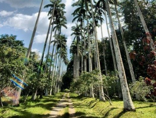 The Bunso Arboretum Forest Reserve