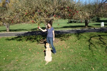 I love fresh apples - the dog too