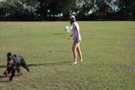 Exercising at the dog park