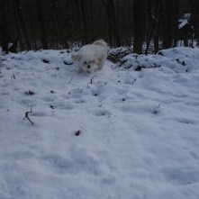 Snowy walk - Mickey