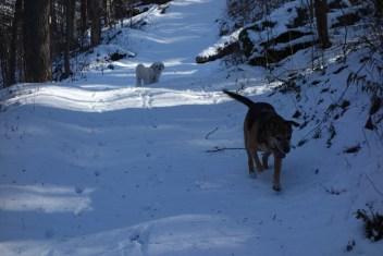 Trailblazers on virgin snow
