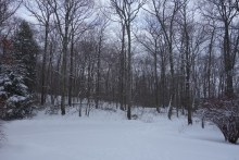 Living in the snowy woods