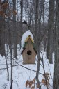 Winter home of a squirrel
