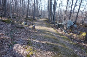 Henry on the trail