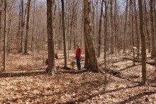 Hiking in the Pelham Lake woods