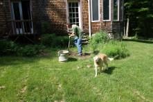 Mark's gardening aptitude appears better than mine