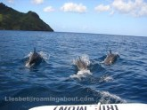 Dolphins in the anchorage love to play with the dinghy