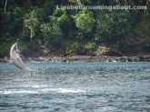 Free dolphin show in an anchorage in Tahuata, Marquesas, FP