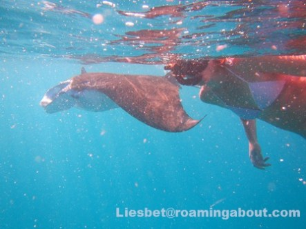 The biggest cherry: swimming with wild manta rays next to our boat in the Marquesas, FP