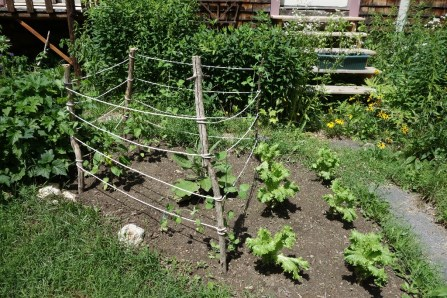 "We had to build a little rope ""fence"" for the pea plants to hold onto."