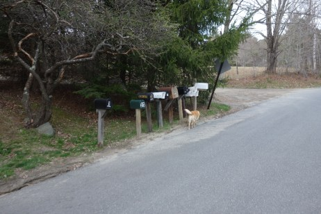 Picking up the mail in late afternoon