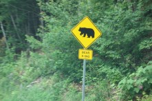 We never saw a bear along the road
