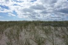 Beach grass adorns dunes and sand patches