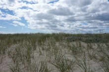 Beach grass adorns dunes and sand patches