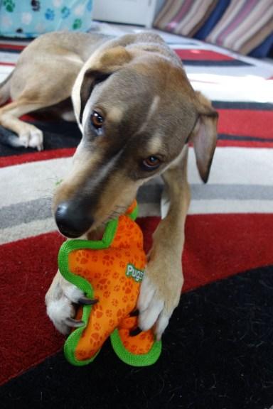 Herk loves his own present