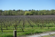 Lots of vineyards in Sonoma County