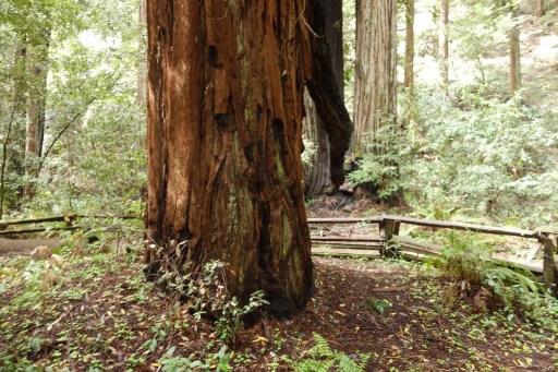 Icicle Tree