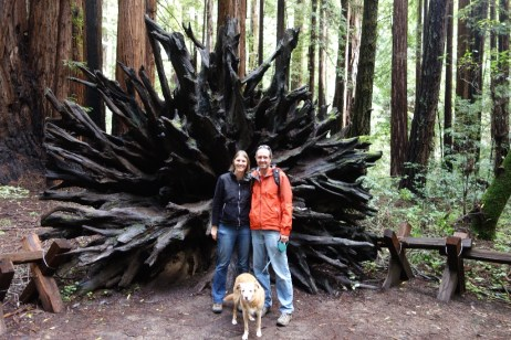 Redwood root system with Mark, Lola and Liesbet