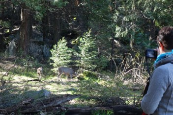 Griet loves taking photos of deer and other wildlife