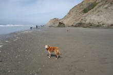 Lola had a ball at the beach, and even found a ball!
