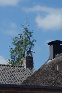 Stork spotted on the chimney
