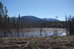 Lots of logging of dead trees going on, to prevent wildfires