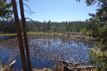 One of the forest lakes