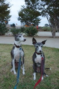 Elvis and Frida at the park in Liberty Station