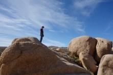 Boulders, cacti and Joshua trees define this desert landscape