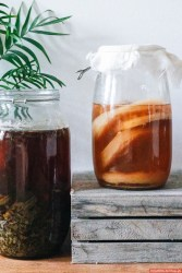 Very Soothing Carbonated Kombucha Appreciation Video