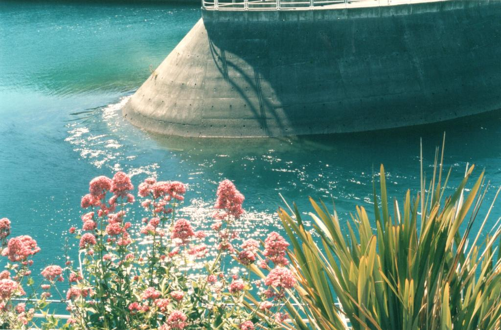 Flowers and detail of the Lake Hawea dam - Rob Gregory Author